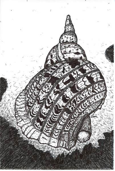 Conch Discovered, drawing by Brian Looney