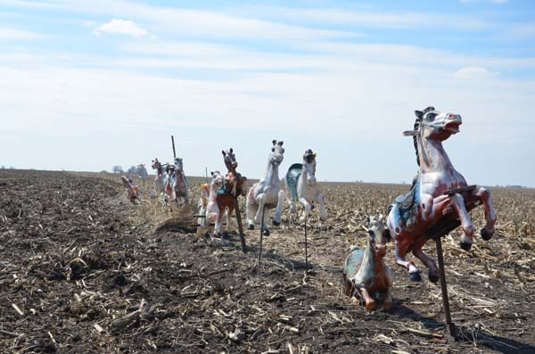 Cornfield Horses photography by David J. Thompson