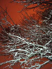 Nature 01/13/05,art from John Yotko