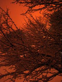 Nature at dusk 01/13/05, art from John Yotko