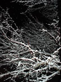 Nature at night 01/13/05, art from John Yotko