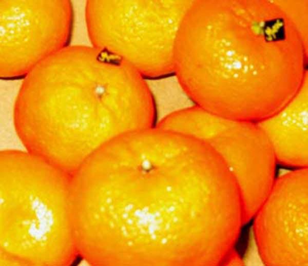 Oranges, art by Cheryl Townsend