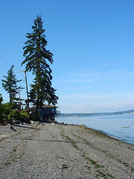 a shoreline and a house with a tree at Puget Sound