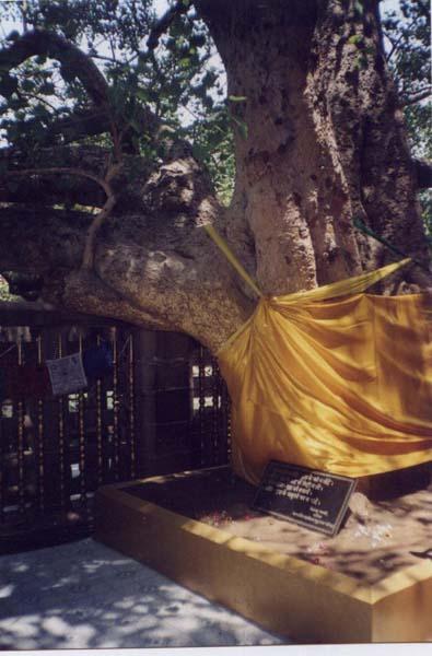 Bodh Gaya - Bodhi Tree, photography by Xanadi