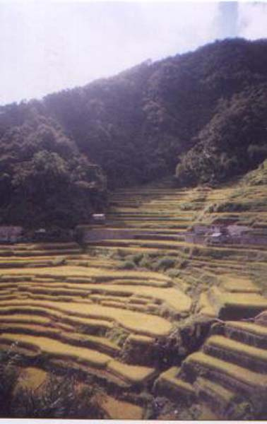 Rice Terraces (Harvest), art by Xanadu