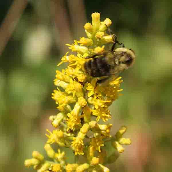 bee. photographed 201030914 by John Yotko